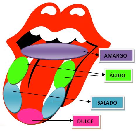 sabores-lengua