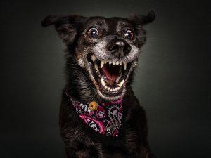 perro-6