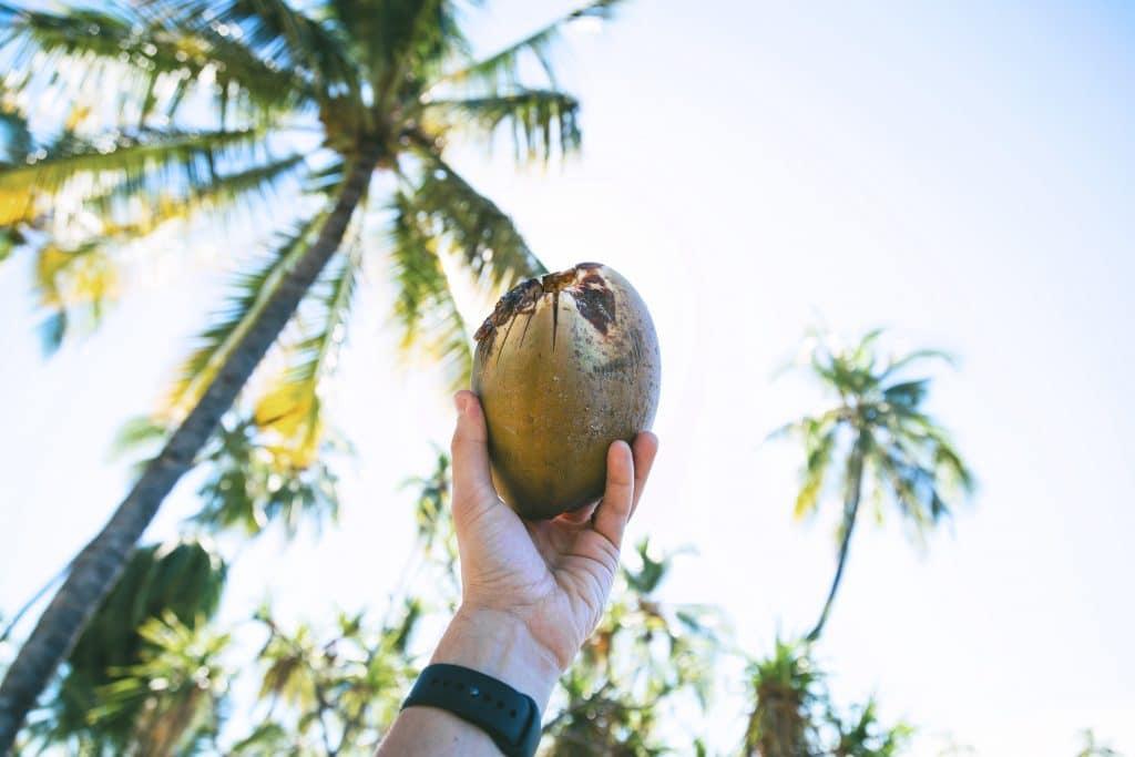 tendencia de belleza coco