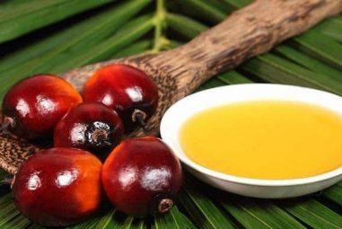 ¿Cuánto aceite de palma consumas al día sin saberlo?